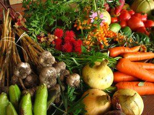 carotte par elina mark