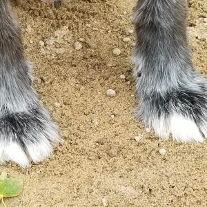 melange-canin